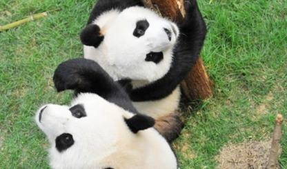 澳门大熊猫馆